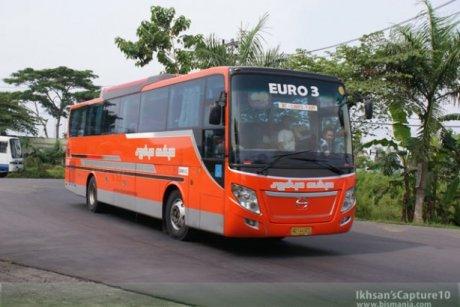 bus bis sedya mulya